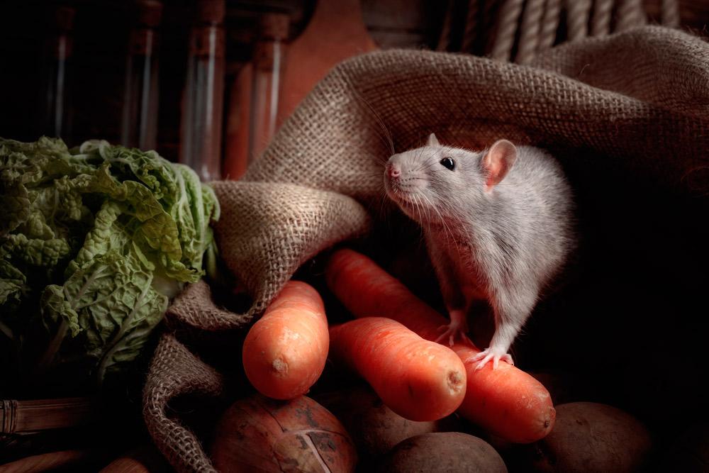 ratón en la cocina de restaurante